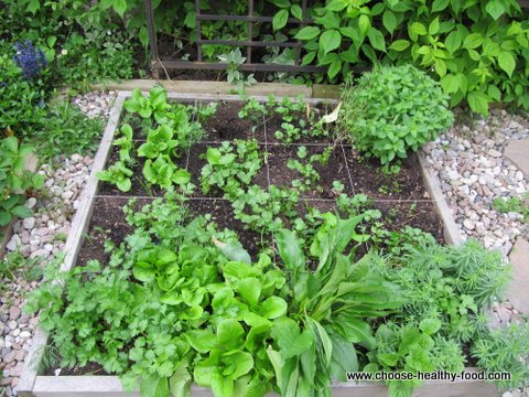 switching from square foot garden to Food4Wealth