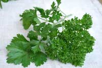 parsley picture