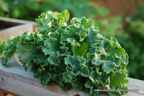 Best Raw Kale Chips Recipe