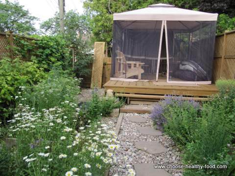 ecological-vegetable-garden