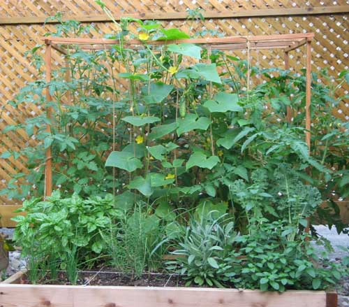 square foot garden in the summer